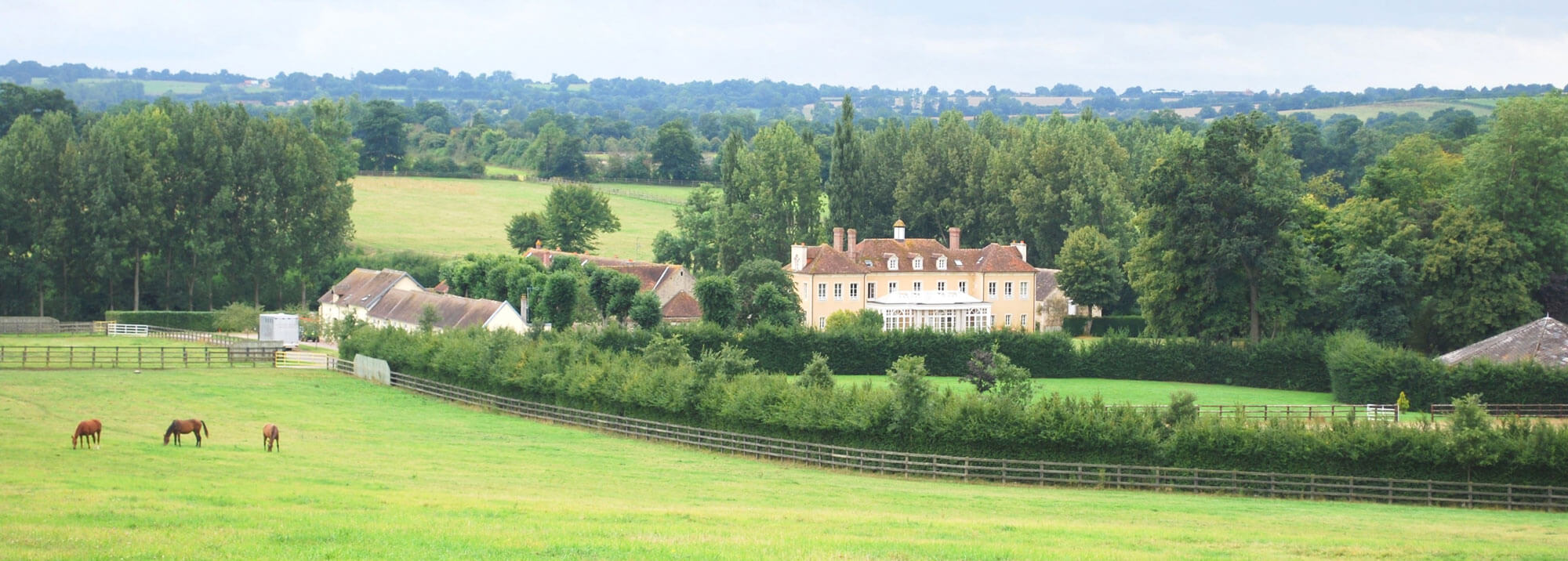 Back-view-of-Haras